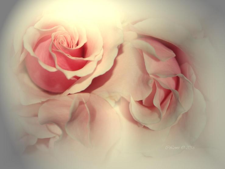 pinkrosecollagesoftedgeLight