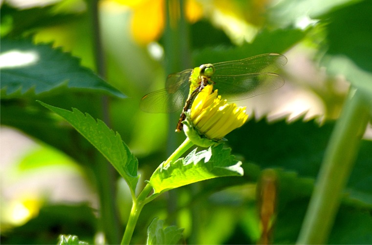 07172020 HLG insectsPicture2