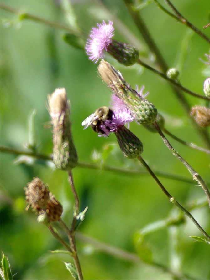07172020 HLG insectsPicture3