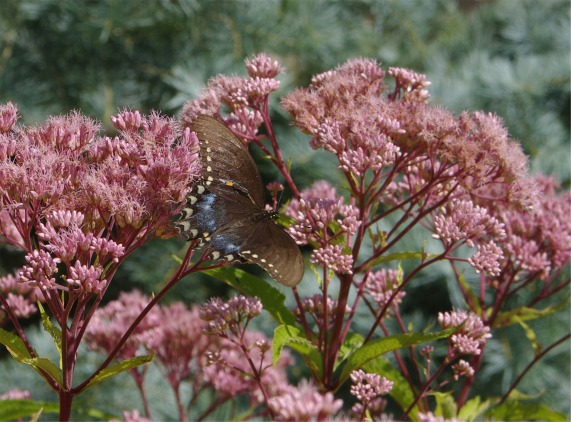 08122020 HLG butterflyPicture1