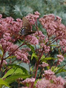 08122020 HLG butterflyPicture2