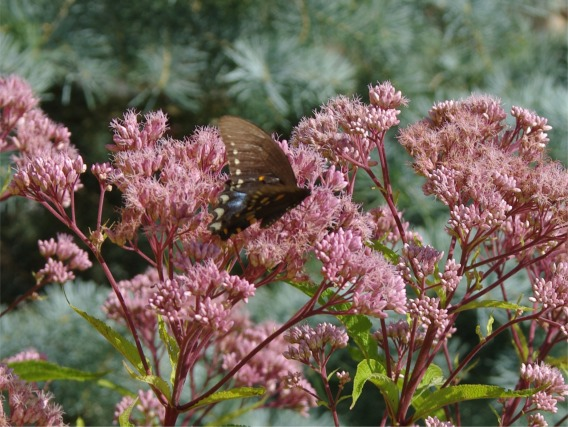 08122020 HLG butterflyPicture3
