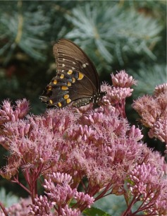 08122020 HLG butterflyPicture5